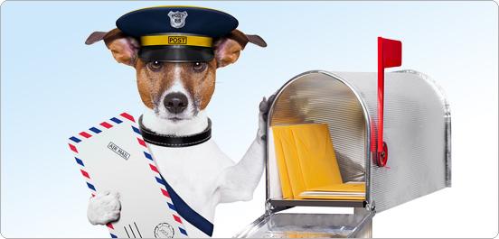 фото почтальон собака
